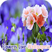 Download Flowers Live Wallpapers APK
